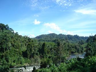 [hutan+tropis+sumatra.png]